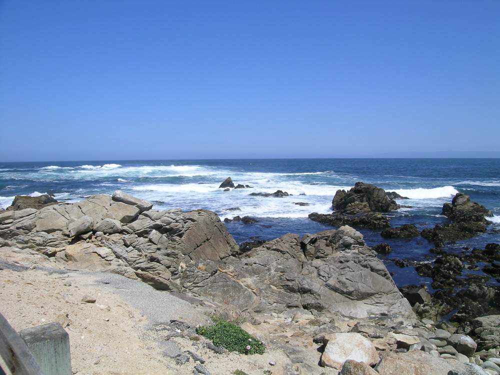 Near Pebble Beach in Monterey